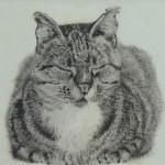 Katzen,  siehe Katzen